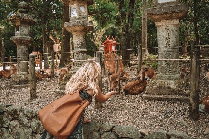 Click ngay vào bài nếu bạn đang tìm kiếm kinh nghiệm du lịch Nara Nhật Bản!