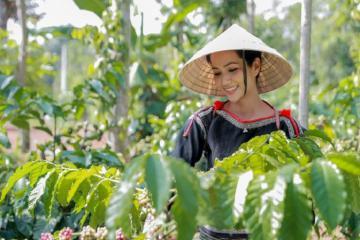Trải nghiệm mùa thu hoạch cà phê ở Tây Nguyên cùng hoa hậu H'Hen Niê