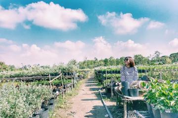 Tuyệt đẹp làng hoa Sa Đéc - Đồng Tháp mùa Tết 2020