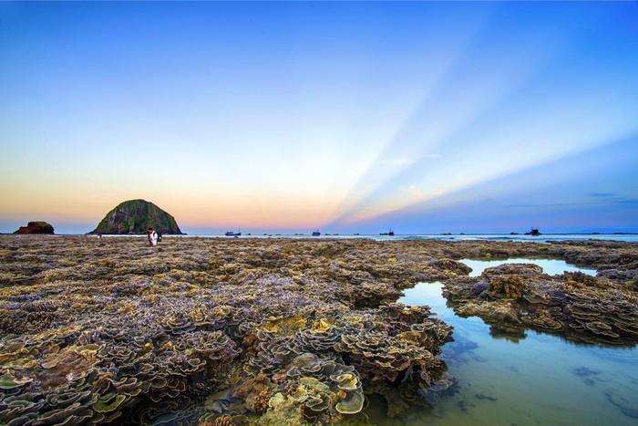 Ngẩn ngơ trước vẻ đẹp của vườn san hô ' lộ thiên' Phú Yên