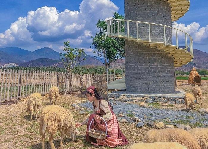 Tới đồng cừu Suối Tiên vào mùa hè bạn sẽ được thỏa thích khám phá và chụp ảnh