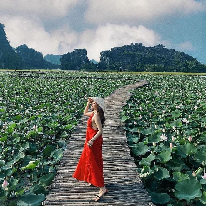 Đến Ninh Bình mùa nào đẹp nhất? - mùa sen nở