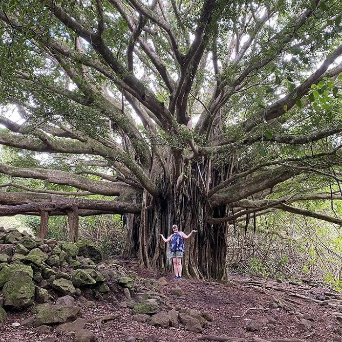 cây cổ thụ - điểm nhấn của vườn quốc gia Haleakala