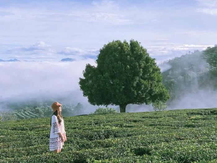 điểm săn mây ở Đà Lạt - ngắm cảnh đồi chè Cầu Đất