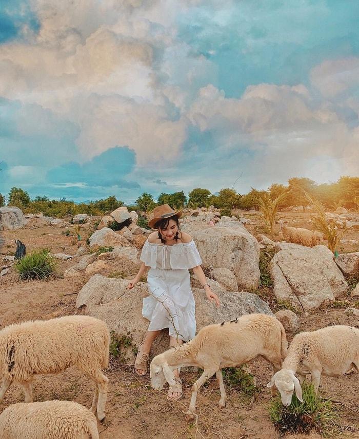 Vẻ đẹp của đồng cừu Suối Tiên  Ninh Thuận.