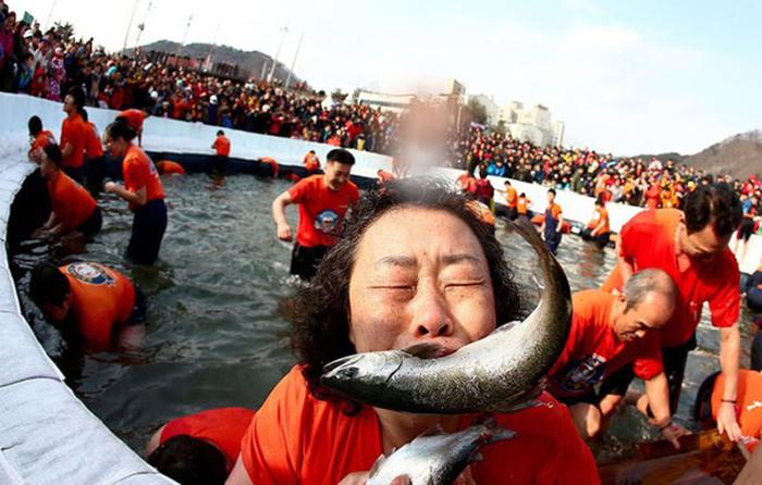 Những lễ hội tháng 1 sôi động  - câu cá hồi trên băng Hwacheon