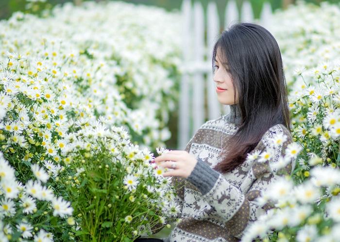Không riêng Thủ đô, Thanh Hóa cũng có mùa cúc họa mi đẹp nao lòng!