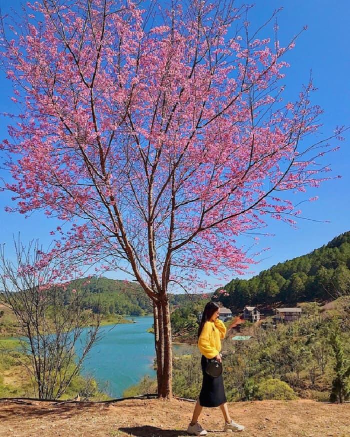 Tomorrow season, cherry Da Lat - check in by Tuyen Lam lake
