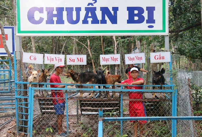 Visiting Phu Quoc Ridgeback Dog farm - many competitions held at the dog farm