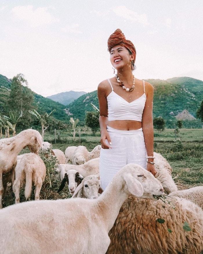 Nô đùa với đàn cừu trắng muốt tại đồng cừu Suối Tiên