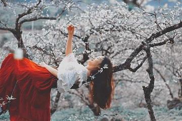 Chìm đắm trong giấc mơ hoa núi rợp trời ở thung lũng mận Mu Náu Mộc Châu