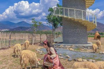 Lạc vào thế giới cổ tích ở đồng cừu Suối Tiên Ninh Thuận