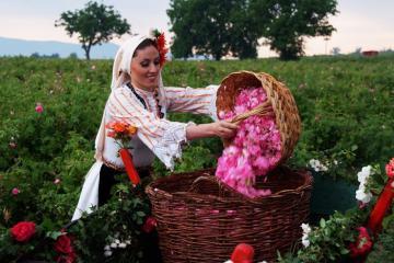 Ghé thăm thung lũng Kazanlak tràn ngập hoa hồng ở Bulgaria