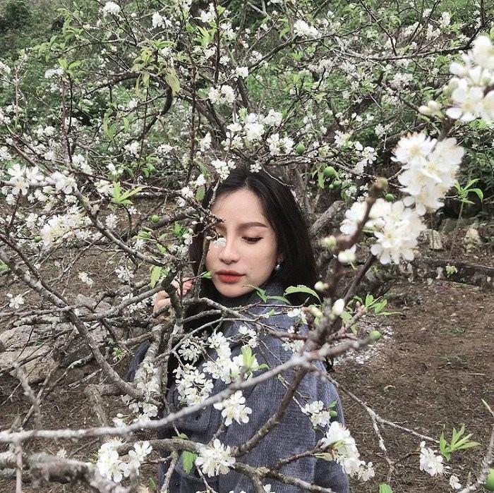 mùa hoa ở thung lũng mận Mu Náu