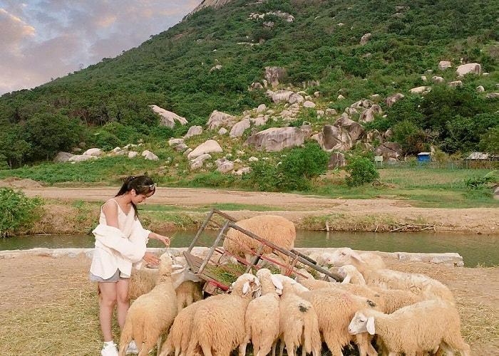 Khung cảnh bình yên, thơ mộng của đồi cừu Suối Tiên