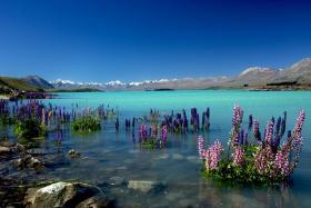 Du lịch New Zealand không thể bỏ qua những điểm đến tuyệt vời này!