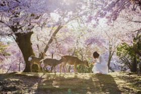 Click Ngay Vào Bài Viết Nếu Bạn Đang Cần Kinh Nghiệm Du Lịch Nara Nhật Bản