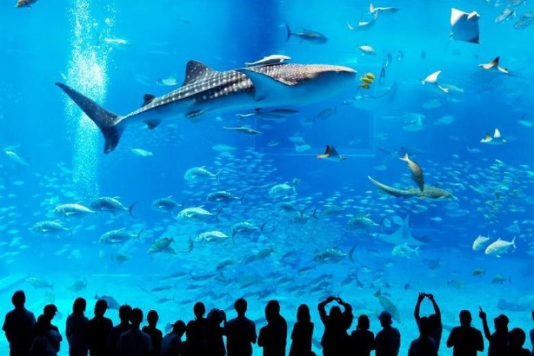 Thủy cung Sea Aquarium