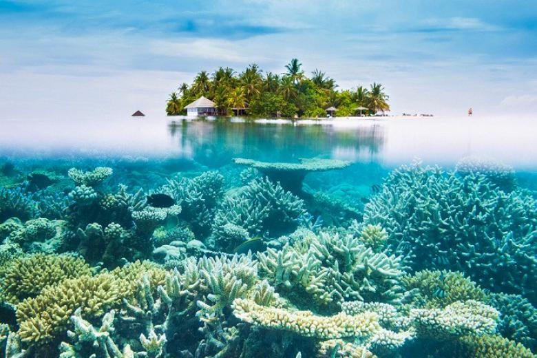 San hô ở Maldives