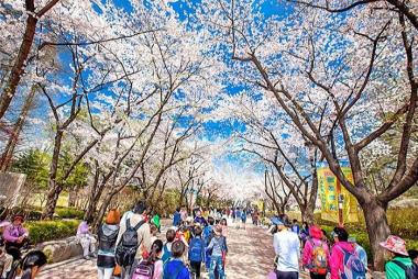HCM - Seoul - Nami - Eveland 5N4Đ Bay VJ