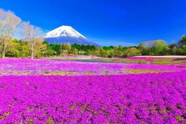 Cần Thơ - Tokyo - Nikko - Yamanashi - Fuji 5N Bay ANA