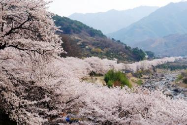 HCM - Seoul - Nami - Eveland 5N4Đ Bay VJ, Khách Sạn 5*