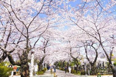 HCM - Seoul - Nami - Eveland 5N4Đ Khách Sạn 5*, Bay VJ