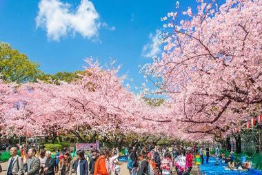 Cần Thơ - Kansai - Kyoto - Osaka 4 Ngày Bay VJ
