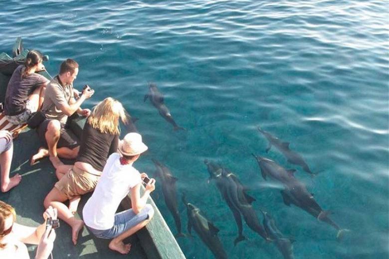Ngắm cá heo ở Maldives