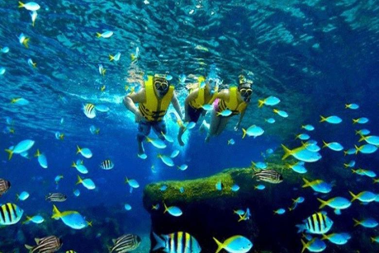 Thế giới dưới nước Sea-Aquarium