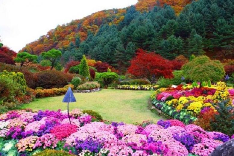 Cần Thơ - Seoul - Nami - Eveland 5N Bay VJ