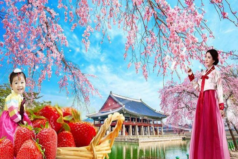 Cần Thơ - Seoul - Nami - Eveland 5N4Đ Bay Vietjet