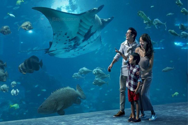 Thủy cung S.E.A Aquarium