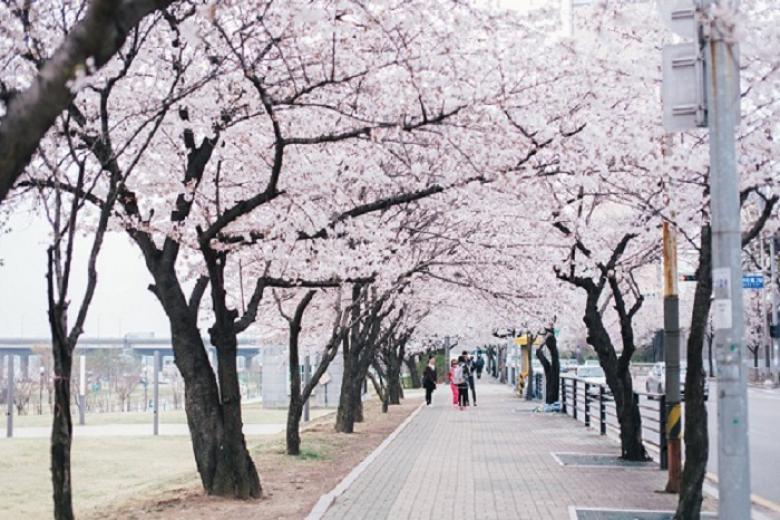 Hà Nội - Seoul - Nami - Eveland 5N4Đ Bay KE