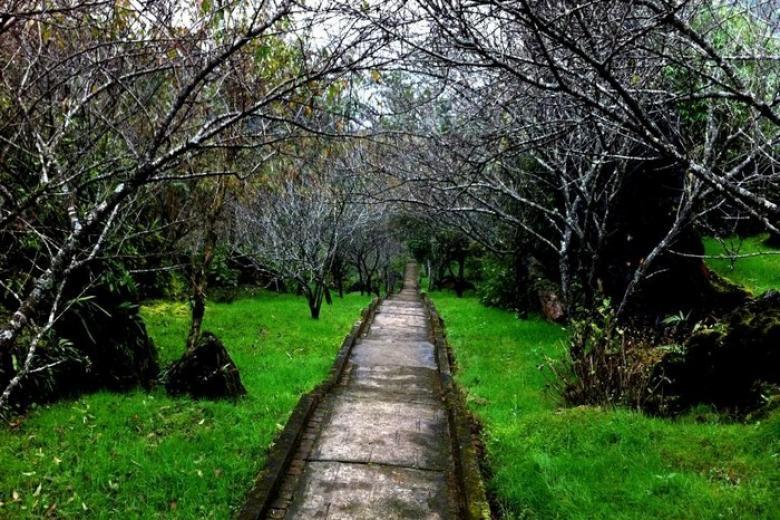 vườn đào Núi Hàm Rồng