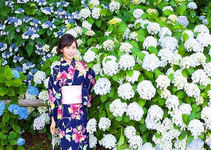Nhật Bản mùa Hoa Cẩm Tú Cầu
