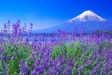 Hà Nội - Osaka - Nara - Kyoto - Núi Phú Sỹ - Kawaguchi - Tokyo 6N Bay Vietnam Airlines