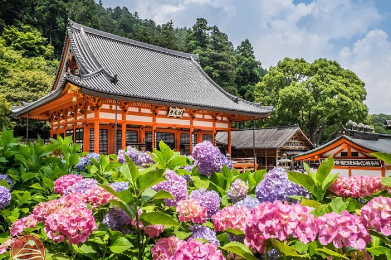 Thanh Hóa - Hà Nội - Osaka - Nara - Kyoto - Núi Phú Sỹ - Kawaguchi - Tokyo 6N Bay Vietnam Airlines