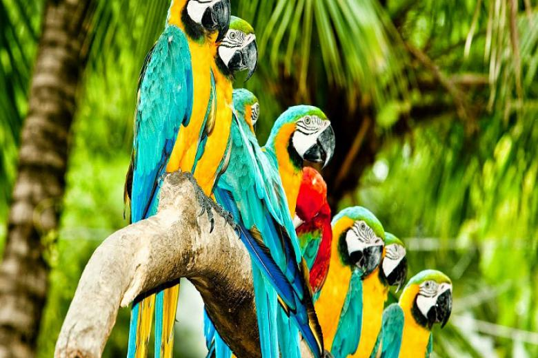 Nha Trang - HCM - Singapore - Jurong Bird 3N2Đ + KS 3, 4*