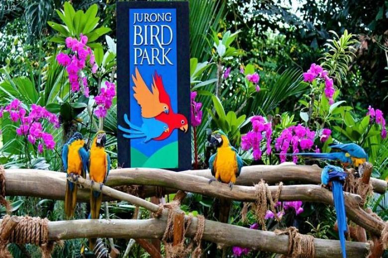 Vườn chim Jurong ở singapore