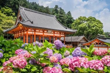 Cần Thơ - Tokyo - Owakudani - Yamanashi - Fuji - Disneyland 5N5Đ
