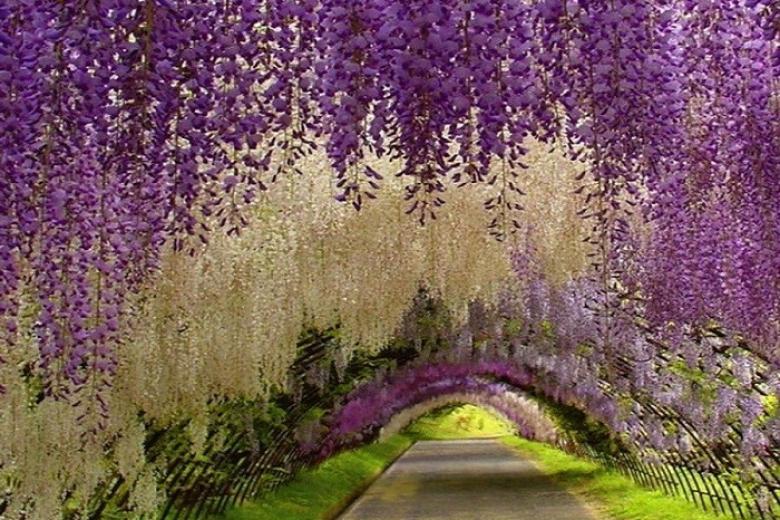 Công viên Ashikaga