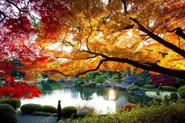 công viên shinjuku