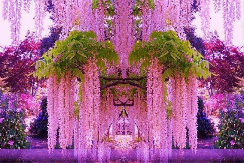 Hoa Tử Đằng