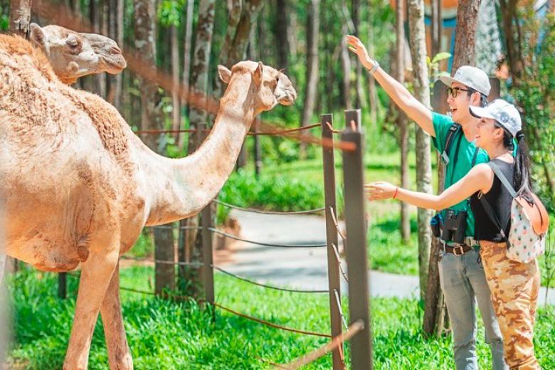 Vườn Thú Mở Safari