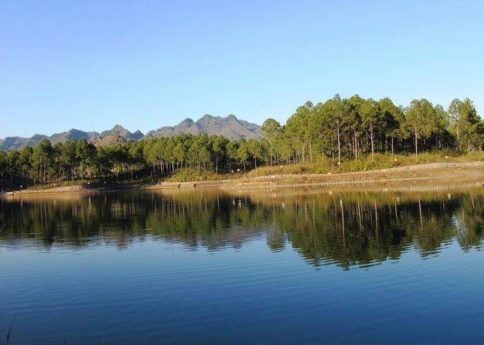 Du lịch các tỉnh Đông Tây Bắc Bộ:Rừng thông Bản Áng
