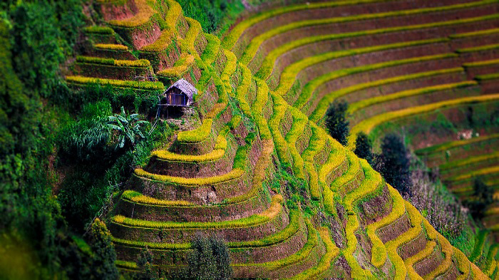 Du lịch Mù Cang Chải: Ruộng bậc thang La Pán Tẩn