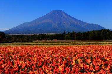 Quy Nhơn - Kyoto - Kobe - Nagoya - Yamanashi - Tokyo 6N5Đ + Bay Vietnam Airlines