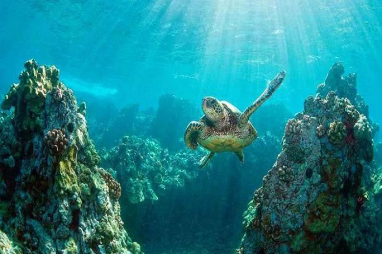 đảo rùa - bali