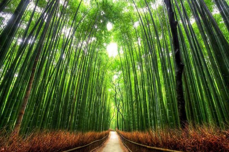 Quy Nhơn - Kyoto - Shiga - Nagoya 4N3Đ